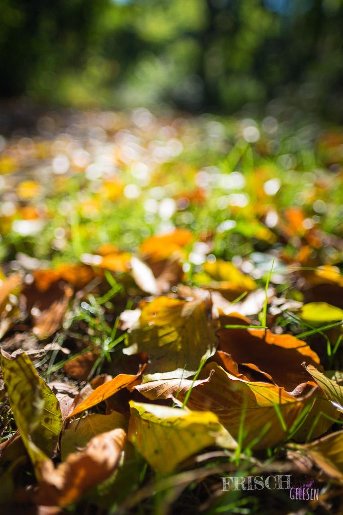 Das Herbstlicht ist immer besonders schön.