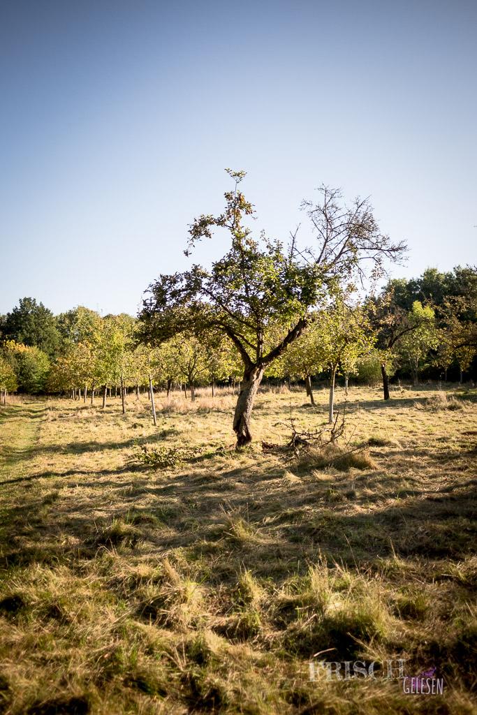 Eine wilde Apfelwiese haben wir auch entdeckt.