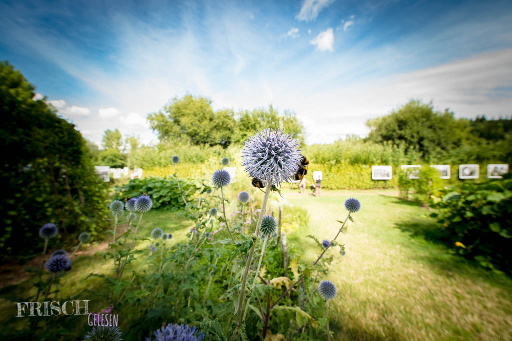 Mitten in Mutter Natur - Festival Photo La Gacilly