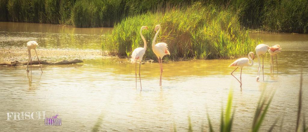 Flamingoliebe entflammt
